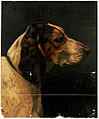 Hector (Dog's Head) (Boston Public Library).jpg