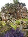 Higuero Tree and Ruins - Santa Ana Mission Cemetery - Argentina.jpg
