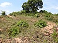 Hill no six-1-mines-yercaud-salem-India.jpg