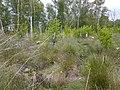 Hiller Moor 2.jpg