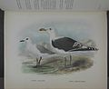 History of the birds of NZ 1st ed p276-2.jpg