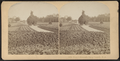 Hoey's Grounds, Long Branch, N.J, from Robert N. Dennis collection of stereoscopic views 2.png