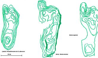 Ileret - Interpretation of a diagramatics o Human footprint in Laetoli (3.7 My) thought to be from A. afarensis; Ileret (1.5 My), from H. erectus, and H. sapiens. The green lines represent the points under the same pressure/weight.
