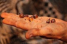 Ant Replete