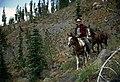 Horse Packing on Steep Trail, Wallowa Whitman National Forest (23896709095).jpg