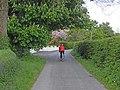 Horse chestnut in flower, Drumhalry - geograph.org.uk - 1297631.jpg
