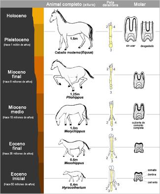 Evidencia de antepasado común - Wikipedia, la enciclopedia libre