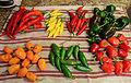 Hot peppers for jelly. Clockwise from bottom left; habaneros, hot Portugal, hot lemon, serrano, poblano, cajun bell & jalapeno.jpg