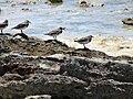 Howland birds.JPG