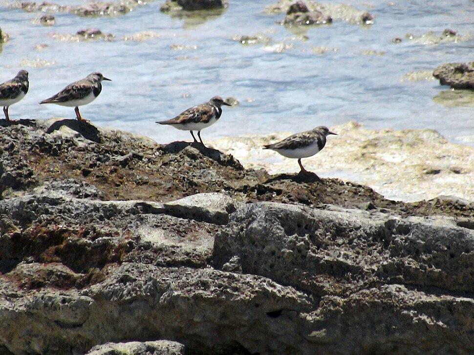 Howland birds