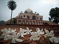 Humayun Tomb in Spring Season.jpg