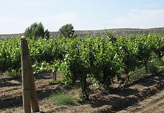 Idaho wine - Vineyard outside of Glenns Ferry on the Snake River