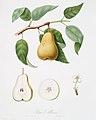 Illustration from Pomona Italiana Giorgio Gallesio by rawpixel00021.jpg