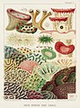 Illustration from The Great Barrier Reef of Australia (1893) by William Saville-Kent from rawpixel's own original publication 00006.jpg