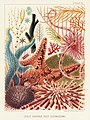 Illustration from The Great Barrier Reef of Australia (1893) by William Saville-Kent from rawpixel's own original publication 00012.jpg