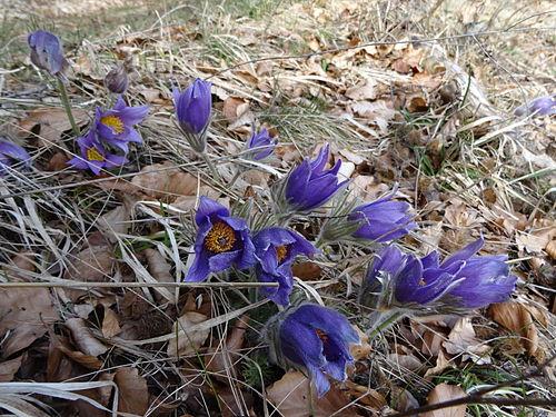 Im Frühling.JPG