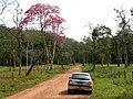 Ipe Roxo - panoramio.jpg