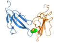 Irditoxin dimer 2h7z.png