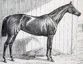 Jannette British Thoroughbred racehorse