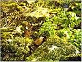 January Frost Botanic Garden Freiburg alpinum - Master Botany Photography 2014 - panoramio (1).jpg