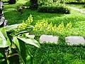 Jardim Village do Dendê, Gamboa do Morro,Cairu - Anna Maria Innocenzi -N° 14 Mini orquidea nativa varios galhos.jpg