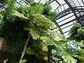 Jardin des plantes Paris Serre de l'histoire des plantes1.JPG