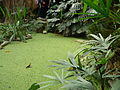 Jardin des plantes Paris Serre tropicale1.JPG