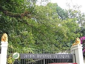 Jard n bot nico del plan de la laguna wikipedia la for Plantas ornamentales wikipedia