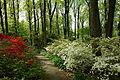 Jenkins Arboretum - DSC00612.JPG