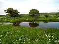 Jeziorko przy zamku - panoramio.jpg