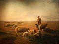 Joudan-Berger et moutons dans la Crau d'Arles.jpg