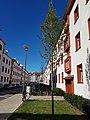 Köln Ehrenbergstraße Baumreihe.jpg