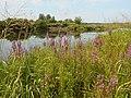 Kanivs'kyi district, Cherkas'ka oblast, Ukraine - panoramio (225).jpg