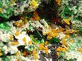Kasolite-Malachite-Metatorbernite-jr-17c.jpg