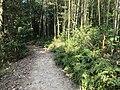 Kasuya Research Forest of Kyushu University 7.jpg