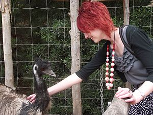 English: Human bonding with an emu in Australia