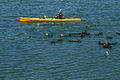 Kayak and sea otters.jpg