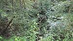 Keltersbaumbach Vegetation.jpg