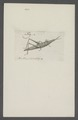 Kend - Print - Iconographia Zoologica - Special Collections University of Amsterdam - UBAINV0274 042 12 0002.tif