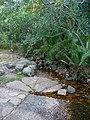Kirstenbosch National Botanical Garden, Cape Town (P1060069).jpg