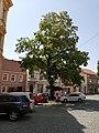 Komenského náměstí (Slaný) (002).jpg