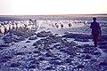 Konya Ova 09 1983 Artemisiastepe bei Karapınar (Konya, Türkei).jpg