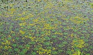 Upo Wetland - Image: Korea Changnyeong Upo Wetland 01