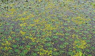 Changnyeong County - Upo Wetland