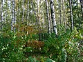 Kotelniki, Moscow Oblast, Russia - panoramio (2).jpg