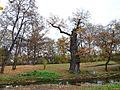Krásný Dvůr, park 03.jpg
