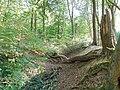 Krefeld Forstwald Reste der Landwehr (Schlacht auf der Kempener Heide) 1.jpg