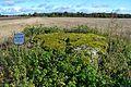 Kultusekivi, Pirgu küla, Sillaotsa talu 11915.jpg