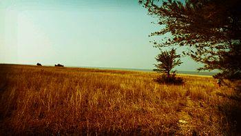 Kumta beach.jpg