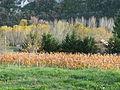 L'automne à Sauliac-sur-Celé.JPG